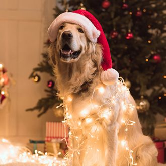 Adornos de navidad, hermosos pero peligrosos para tus mascotas