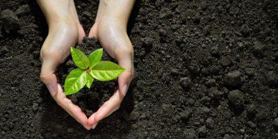 Aprende a cuidar tus planticas