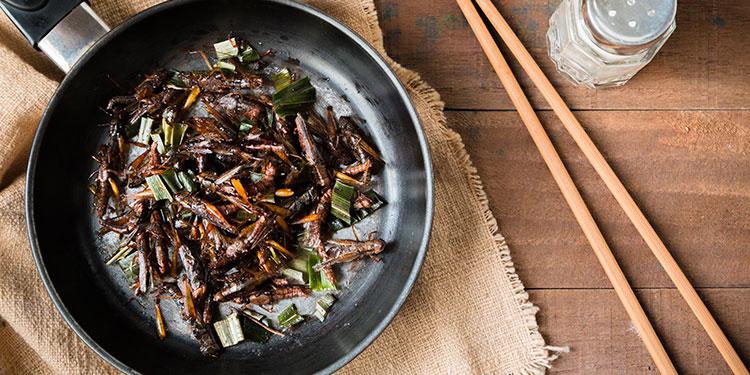 Incluir insectos en dieta alimentaria ayudaría a contrarrestar la obesidad