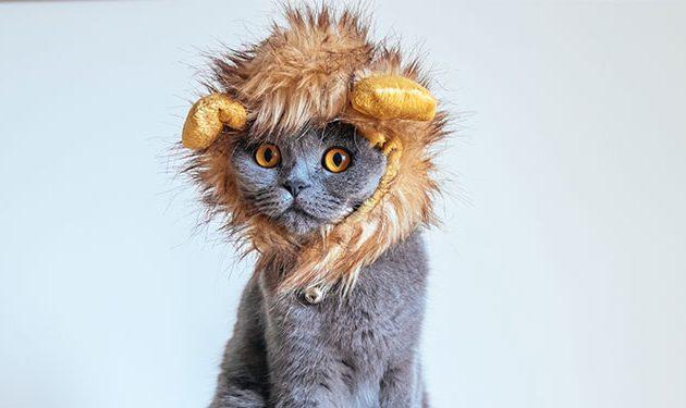Las mascotas también celebran Halloween con divertidos disfraces