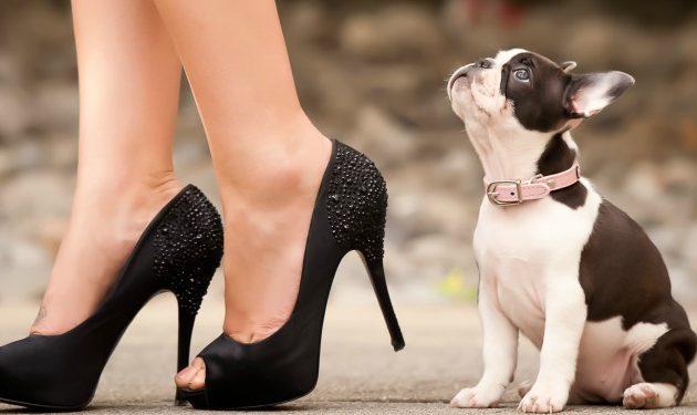 """¿Tu mascota te hace ver más atractiva? Los dejarás diciendo """"miau, miau"""" y """"guau, guau"""" por ti."""
