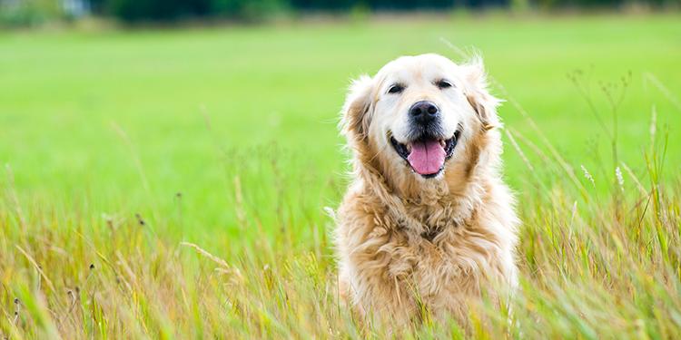 Los perros y la IRC (Insuficiencia Renal Crónica): ellos también la padecen