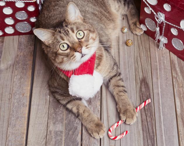 Como introducir un gato nuevo en un hogar donde ya vive otro