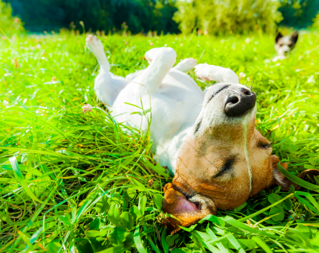 Cómo debes actuar si tu mascota sufre una intoxicación